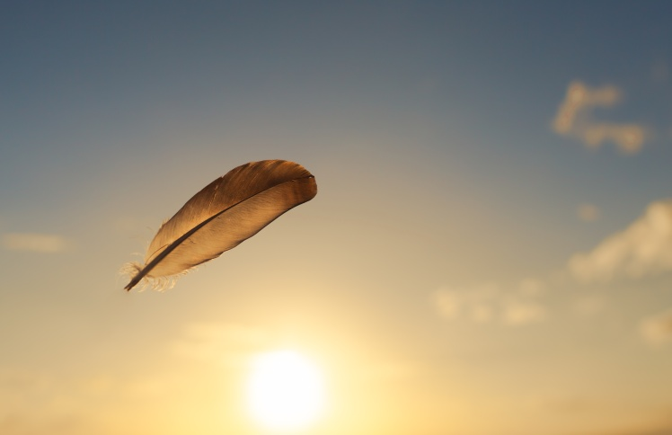 Feather flying in the air